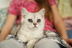 Young kitten on a girl's lap I Royalty Free Stock Images