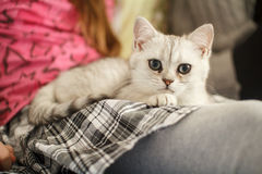 Young kitten on a girl's lap Stock Photo