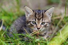 Young kitten in the grass Royalty Free Stock Photography