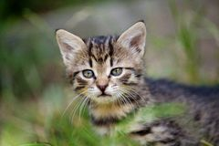 Young kitten in the grass Stock Photos