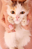 Young kitten in hands Stock Photos