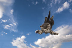 Young kitten jumps Royalty Free Stock Photos