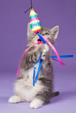 Young kitten playing with rainbow toy mouse. Young kitten playing with a toy mouse in rainbow colours Royalty Free Stock Image