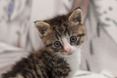 Young kitten Stock Photo