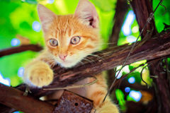 Young kitten sitting on branch Stock Photography