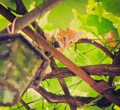 Young kitten sitting on branch Stock Images