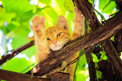 Young kitten sitting on branch Stock Photos