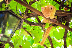Young kitten sitting on branch Royalty Free Stock Images