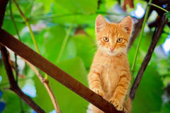 Young Kitten Sitting On Branch Royalty Free Stock Photos