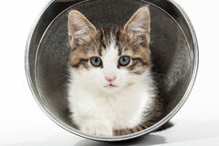 Young kitten sitting in reflector Stock Photo