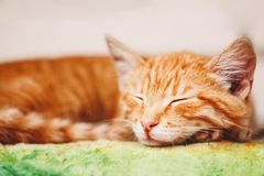 Young Kitten Sleeping Outdoor In Bed Royalty Free Stock Photos