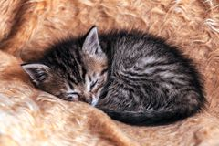 Young Kitten Sleeping Stock Photo