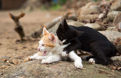 Young kittens playing on the rock. Royalty Free Stock Photography
