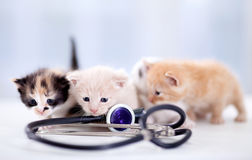 Young  kittens with a stethoscope Stock Photo