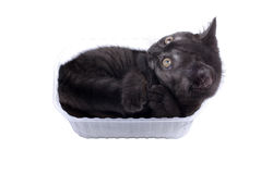 Young kitty in box. Royalty Free Stock Images
