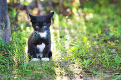 The young kitty Stock Image
