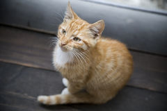 Young kitty on wooden floor. Looking up Stock Photo