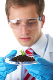 Young lab assistant holds small flat dish Royalty Free Stock Image
