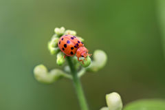 Young lady bug Stock Photos