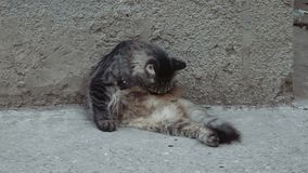 Young lady-cat grooming outside on a concrete surface near wall stock video