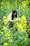 Young lady in  flower fields Royalty Free Stock Photos