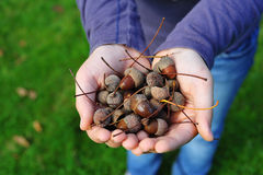 Young lady hands carrying fresh acorns. The hands of a young lady carrying some fresh acorns stock image