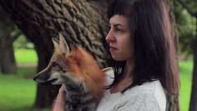 Young lady holding red fox standing in park in sunny afternoon. stock video