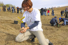 young lady planting sapling stock photography