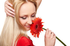 Young lady with red gerbera Stock Photography