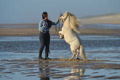Young lady riding a pony at beach in early morning Stock Image
