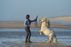 Young lady riding a pony at beach in early morning Royalty Free Stock Photos