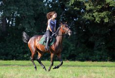 Young lady riding on warmblood horse Stock Photography