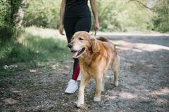Free Young Lady Walking Dog, Low Section Stock Photos - 186243713