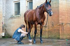 Young lady washing horse hoof by stream of water from a hose Stock Images