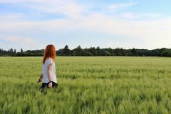 A young lady in the wheat field stock images