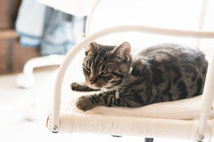 Young lazy tabby cat lying on white chair. Stock Photos