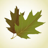 Young leaf on background illustration Royalty Free Stock Photography