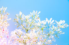 Young leaf in front of the blue sky behind with pink serenity fl Royalty Free Stock Photos