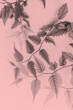 Young leaves, artistic background in soft colours Stock Photos