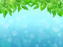 Young leaves on a blue background. Spring background. Summer. Na Royalty Free Stock Images