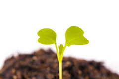 Young leaves just germinated Stock Photo