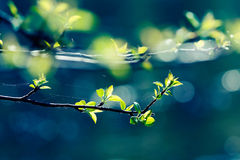 Young leaves. Of tree at spring stock photo