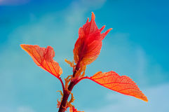 Young leaves on the trees - plum shoots. Stock Photo