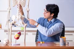 The young lecturer teacher teaching anatomy stock photo