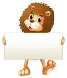 A young lion holding an empty banner. Illustration of a young lion holding an empty banner on a white background Stock Images