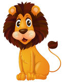 A young lion Stock Image