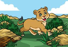 Young lion walking in the jungle. Vector of young lion walking in the jungle Royalty Free Stock Photo