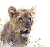 Young Lion watercolor Stock Image