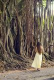 A woman is walking near a tree. Young long-haired woman near a banyan tree stock photo