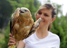 Young Long-legged Buzzard in the hand of an environmentalist Stock Images